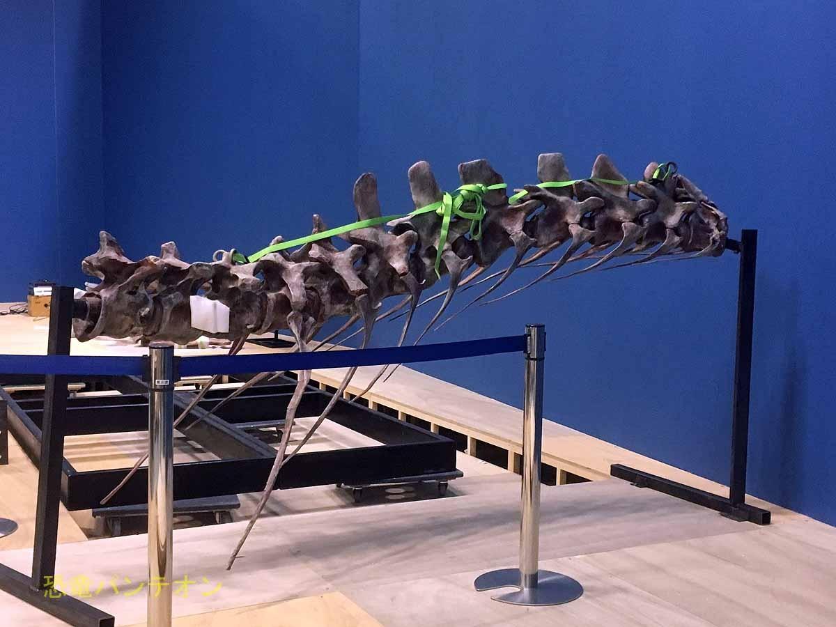 こちらはスピノサウルスの椎骨