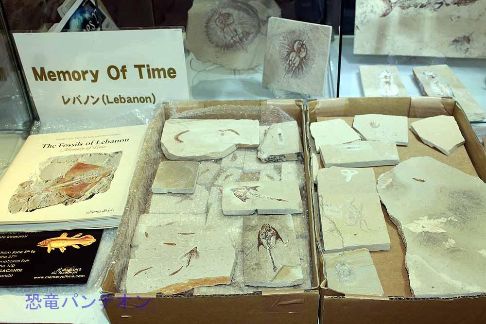 Memory of Time  レバノンのお店。レバノン産の魚化石や古代の遺物