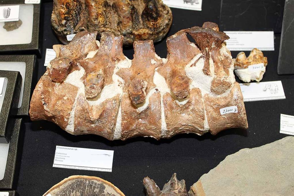Roland Juvyns エラスモサウルス椎骨。田村博さんがお買い上げです。