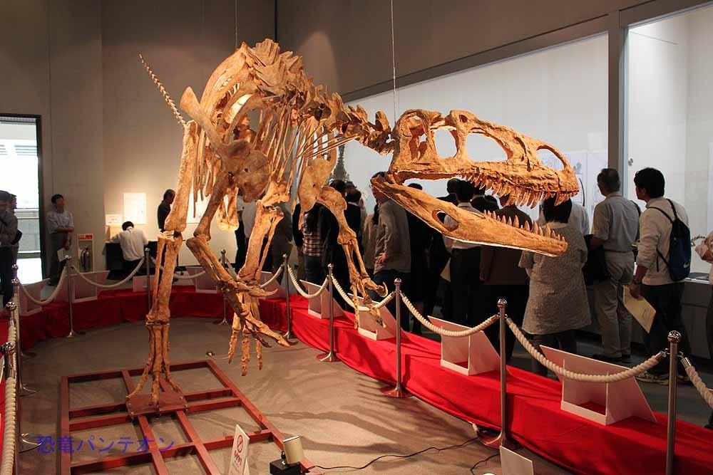 こちらはアフロベナトル骨格。ティラノサウルスと向かい合っています。