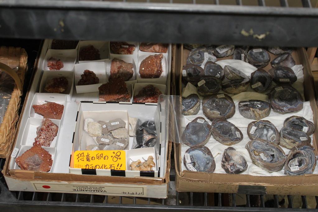 ㈲ミュージアムインポート 恐竜卵殻化石