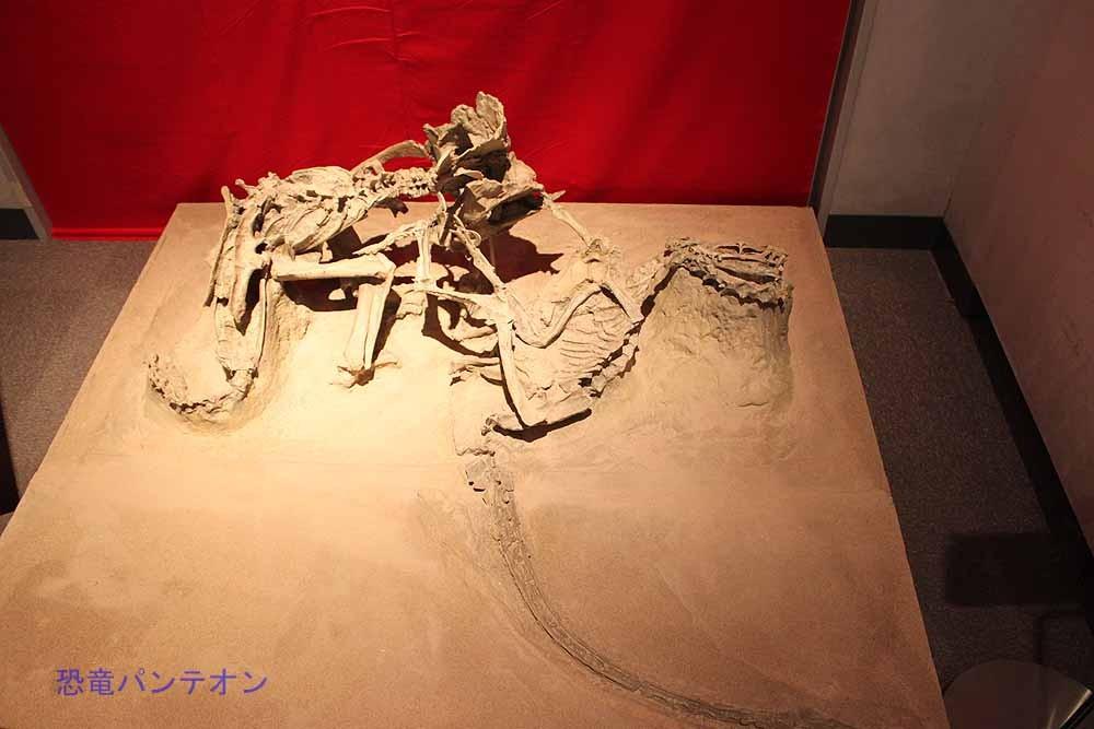 格闘化石。この2匹、どんな事情でこの姿になったのでしょう?
