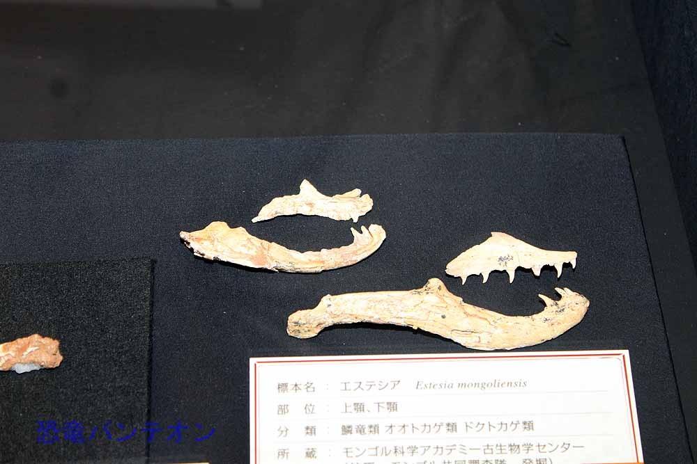エステシア(オオトカゲ類 実物化石)