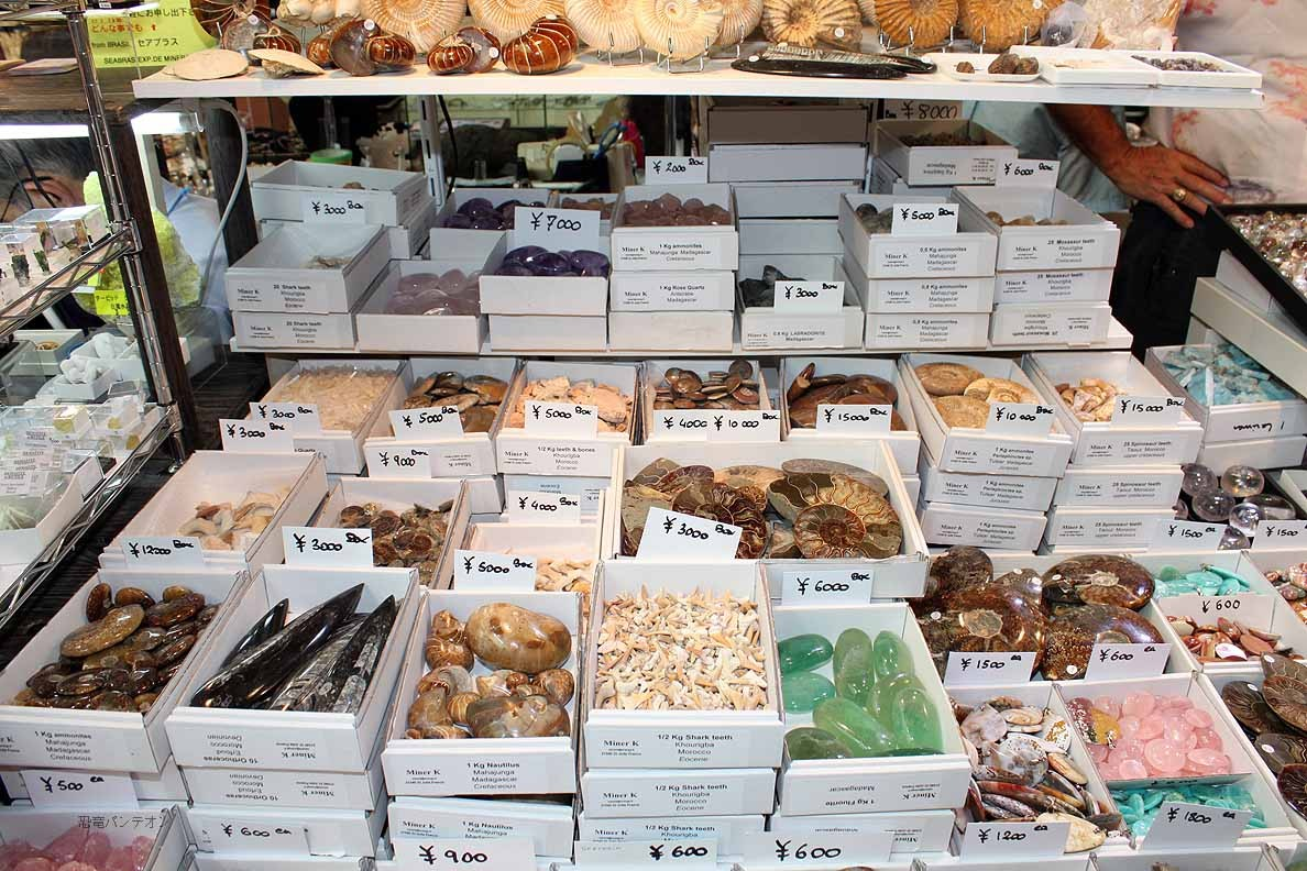 Miner K 39・40 フランスのお店です。アンモナイト、サメの歯などいろいろあります。