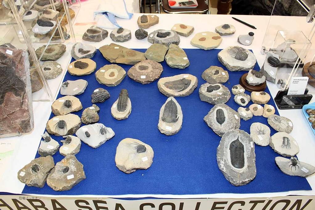 SAHARA SEA COLLECTION 三葉虫、ウミユリなどがあります。
