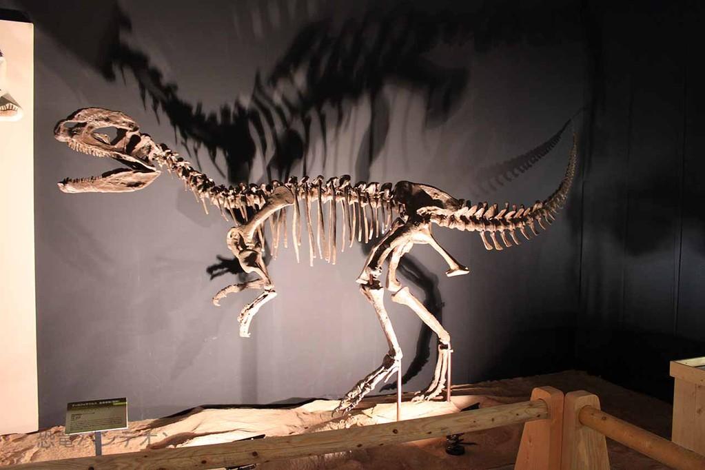 ディロフォサウルス骨格
