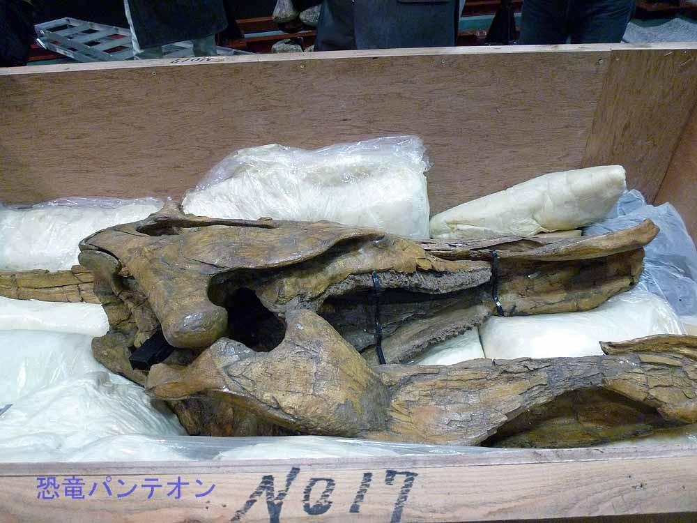 サウロロフス頭骨