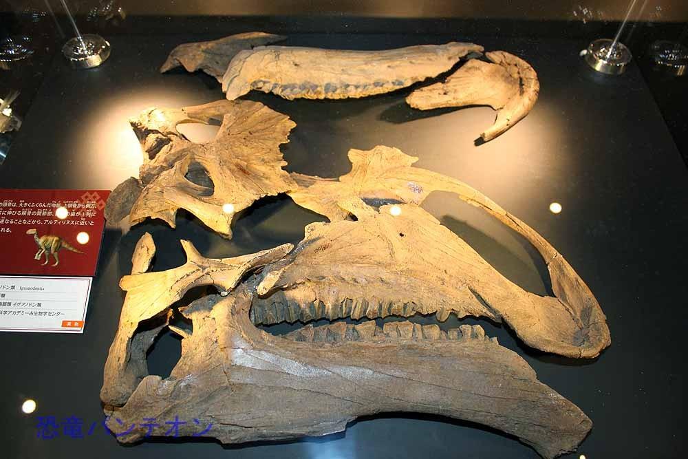 イグアノドン類(実物化石)