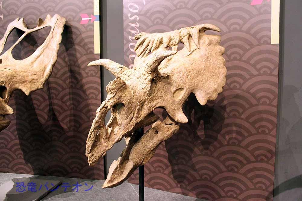 コスモケラトプス Kosmoceratops