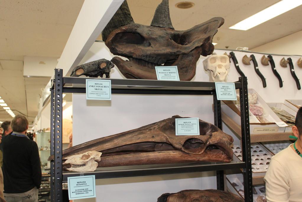 Treasures Of The Earth Ltd 頭骨のレプリカもいろいろです。