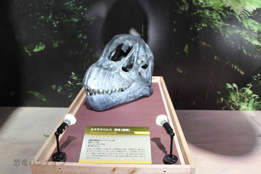 カマラサウルス頭骨