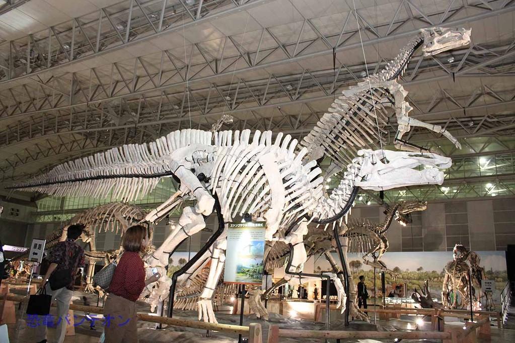 ズケンゴサウルス(全長17m)