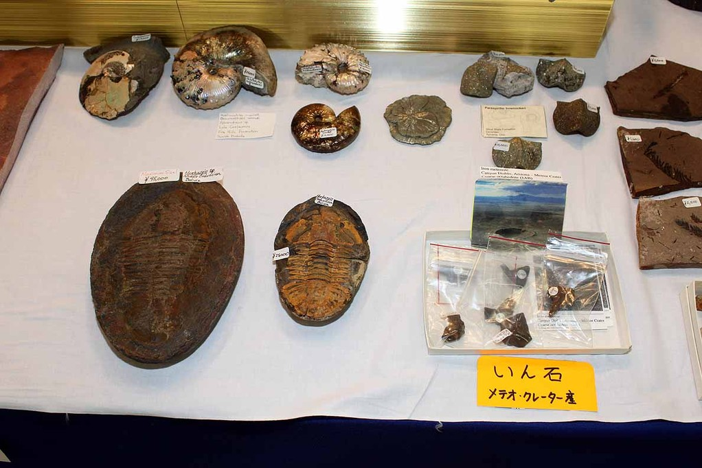 GEORGE HESLEP FOSSILS 恐竜化石は撮影禁止のため、その他のみです。