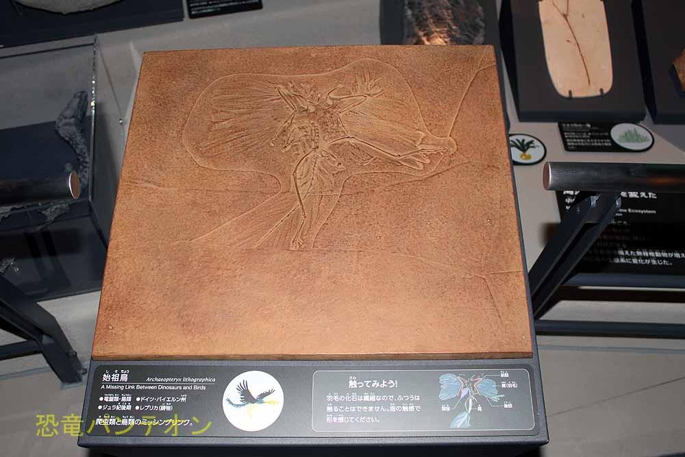 始祖鳥サーモポリス標本を元にブロンズ製作。目の不自由な方にも触って羽毛など感じていただくため。