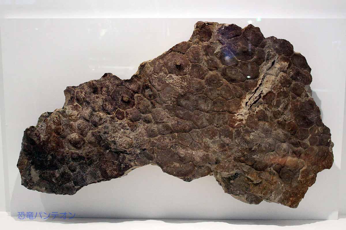 トリケラトプス皮膚痕
