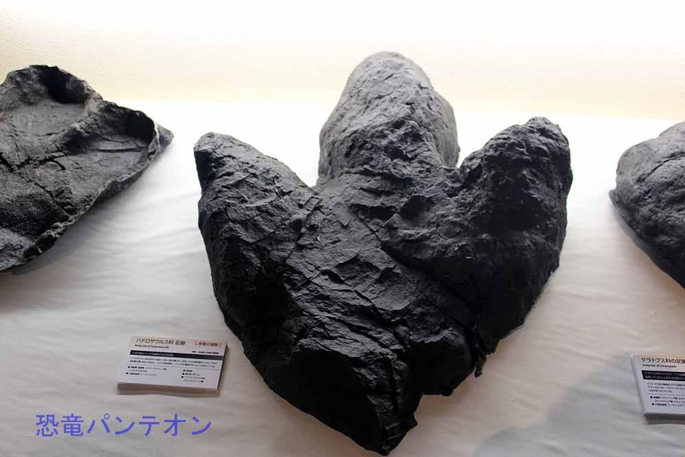 白亜紀後期、ハドロサウルス科足跡。アラスカ州、プリンスクリーク層