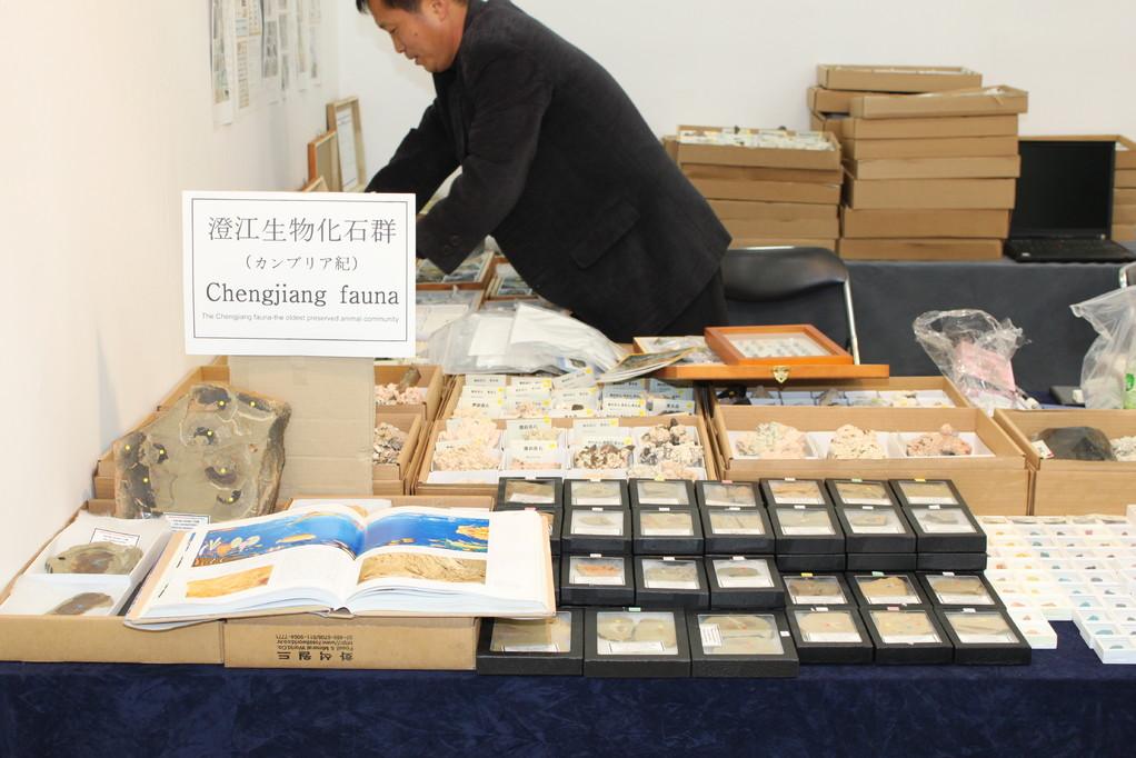 鉱物が主ですが、澄江の化石も扱っています。