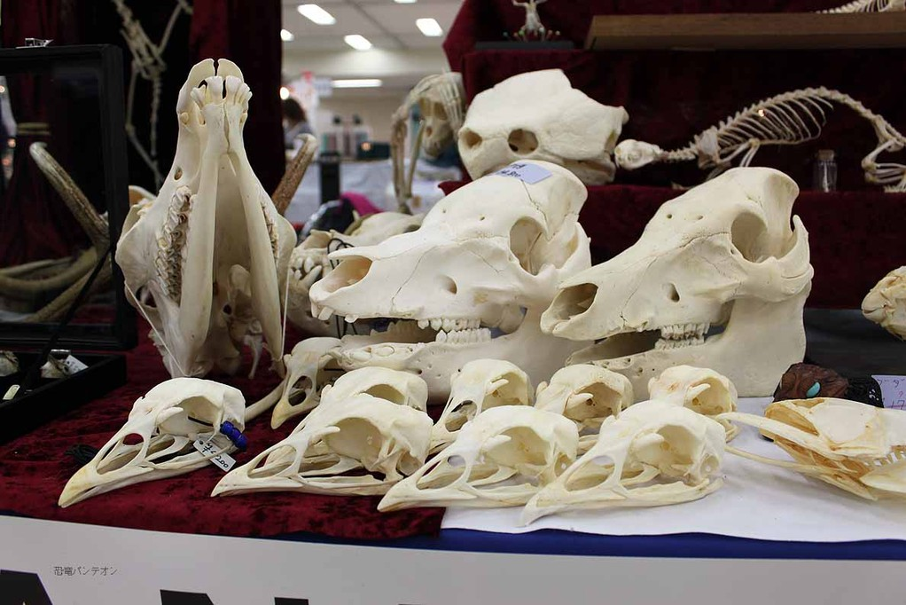 頭骨、頭骨、頭骨・・・
