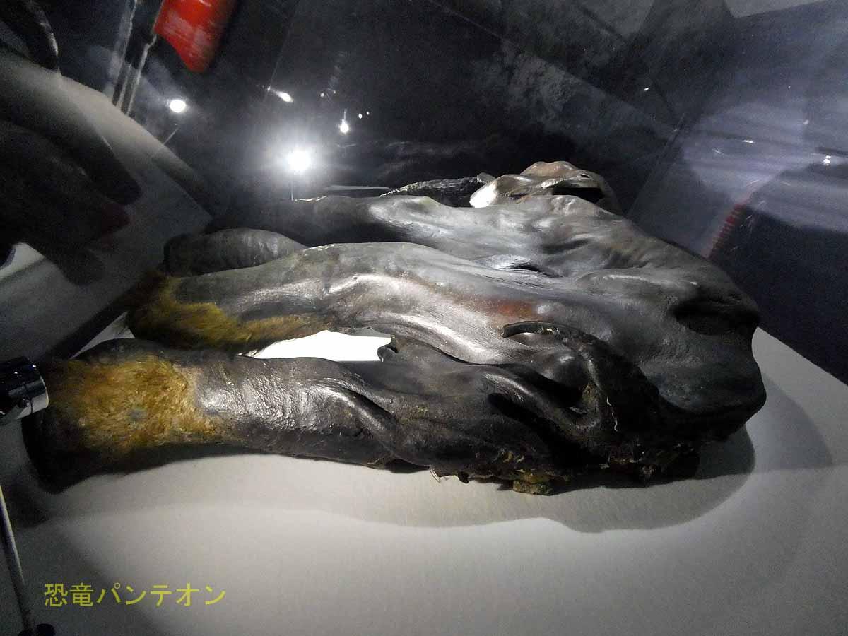 永久凍土から発掘された仔ケナガマンモス「ディーマ」