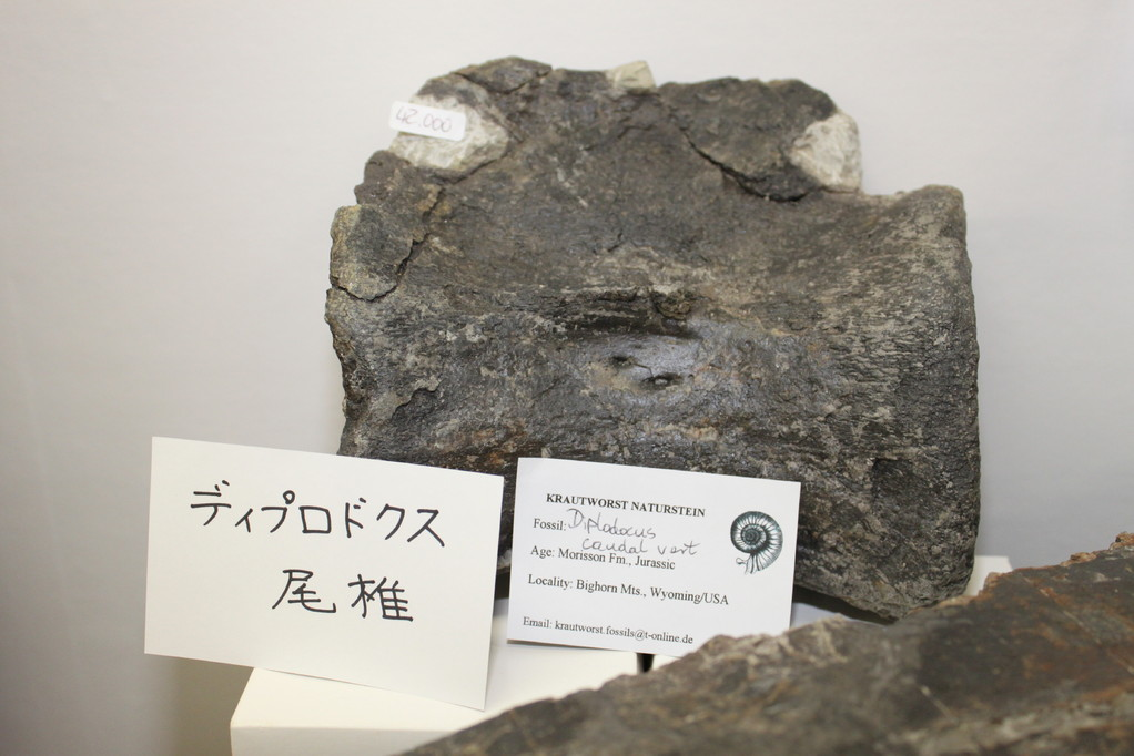 Krautworst Naturstein ディプロドクス尾椎、42,000円。