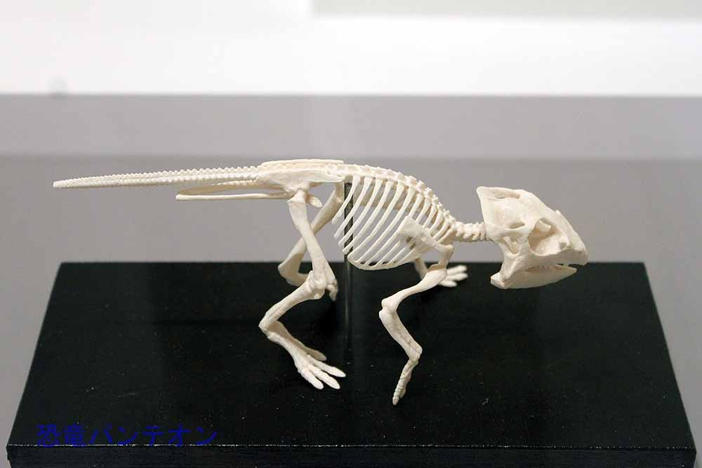 プロトケラトプス全身骨格(レプリカ)