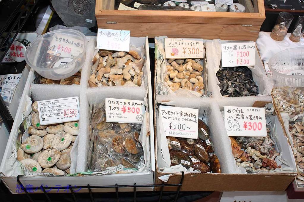パレオサイエンス 手頃な値段のアンモナイトやサメの歯も。