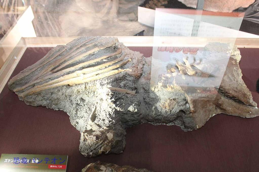 シノケラトプス肋骨