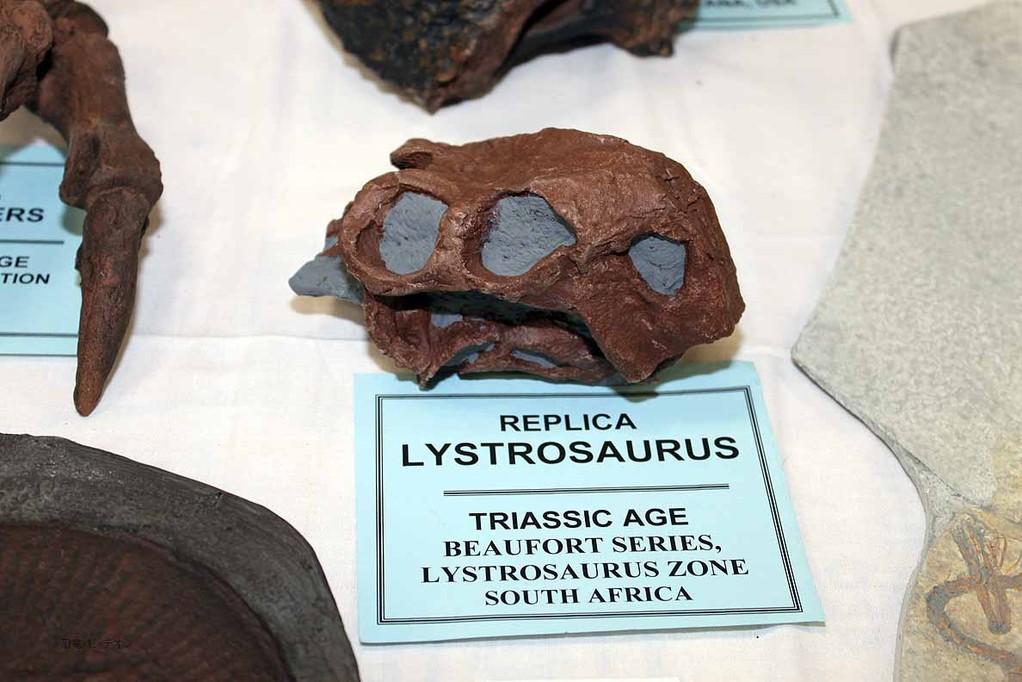リストロサウルス 南アフリカ産