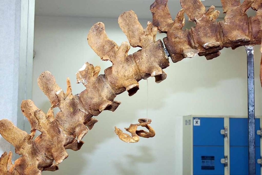 バシロサウルス 後肢の痕跡