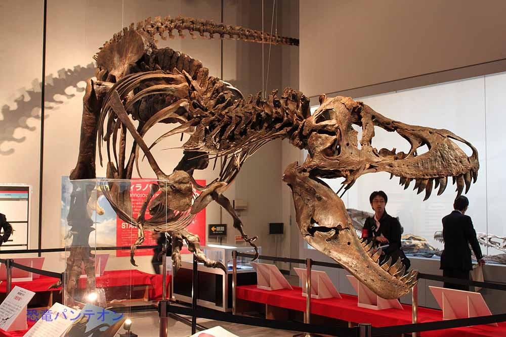 あらためて、ティラノサウルス骨格など