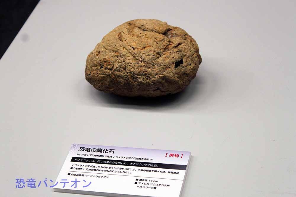 トリケラトプスの可能性がある糞化石