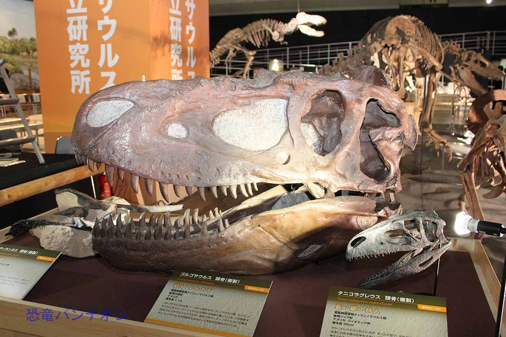 ゴルゴサウルス頭骨