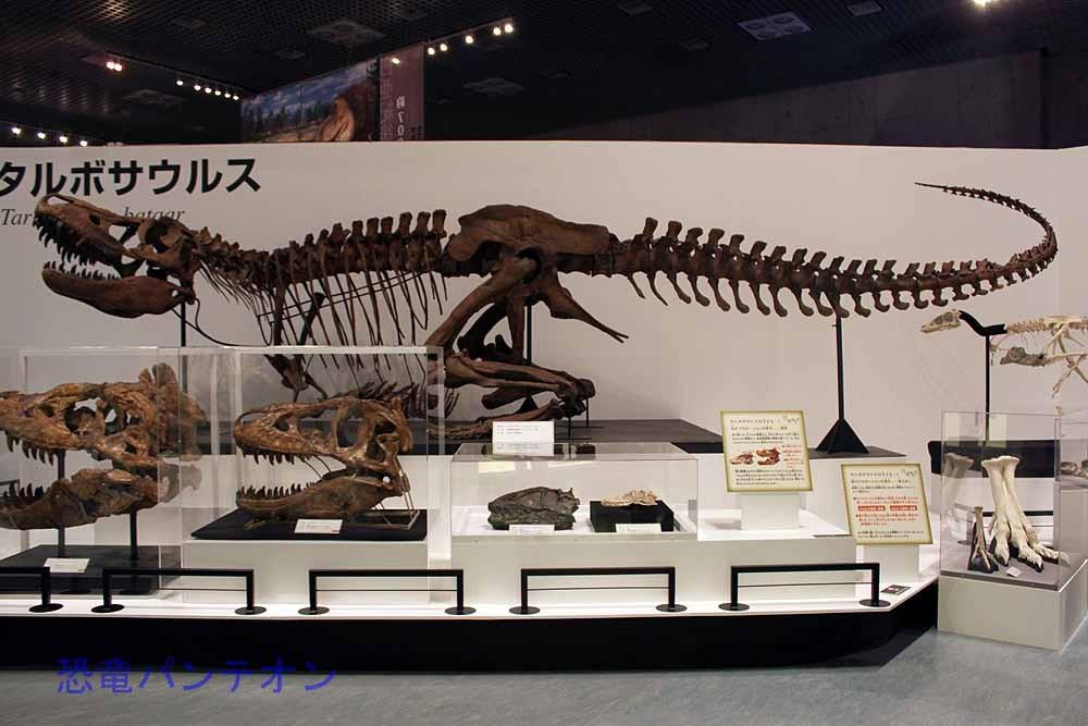 タルボサウルス全身骨格(レプリカ) T-REXで、こんな姿勢の記憶は?