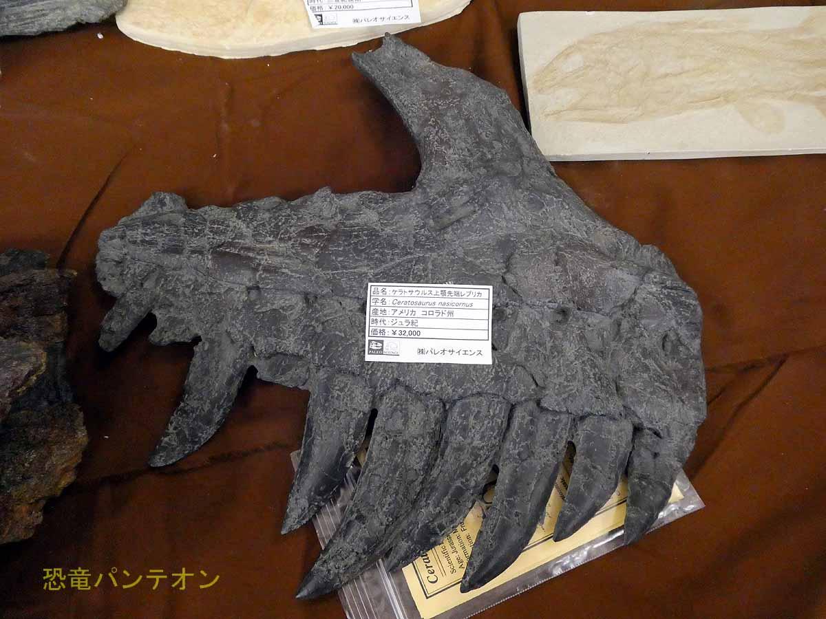 ケラトサウルス上顎先端レプリカ アメリカ・コロラド州