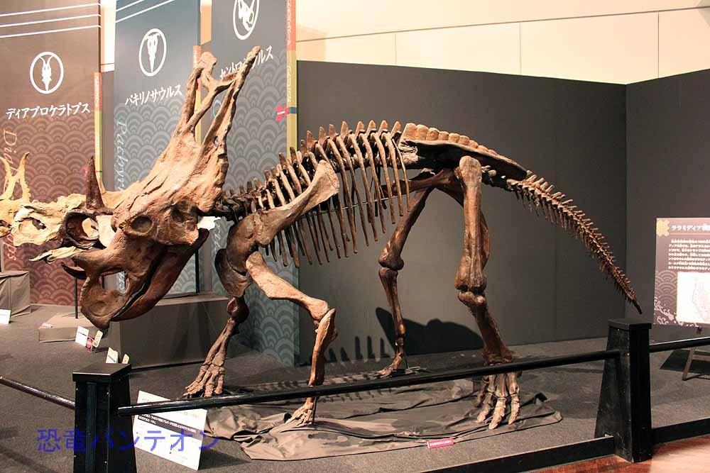 カスモサウルス Chasmosaurus