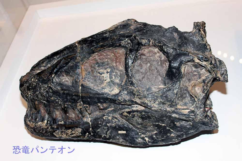 タルボサウルス亜成体(実物化石)
