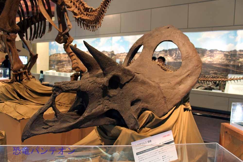 トロサウルス頭骨