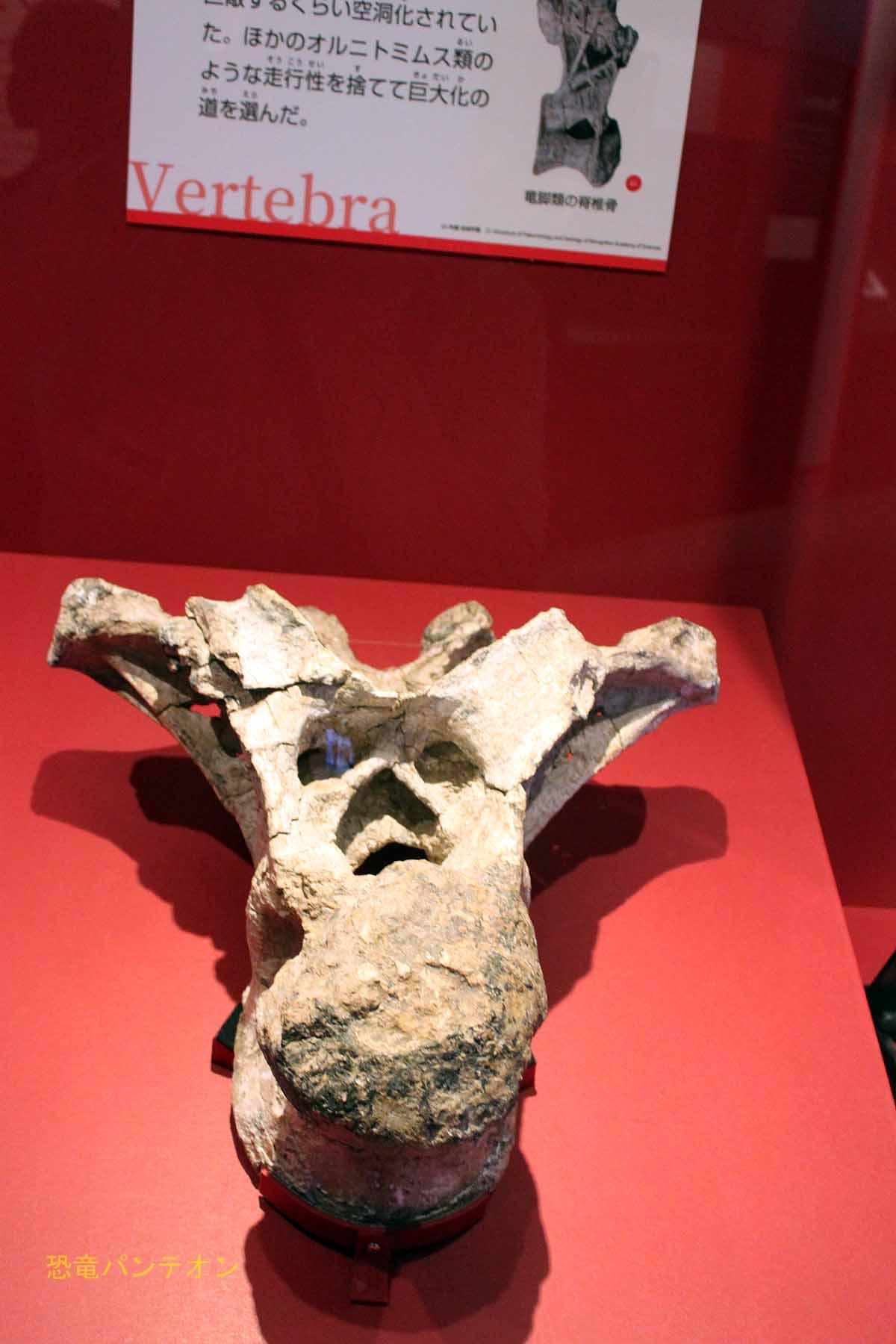 デイノケイルス脊椎骨