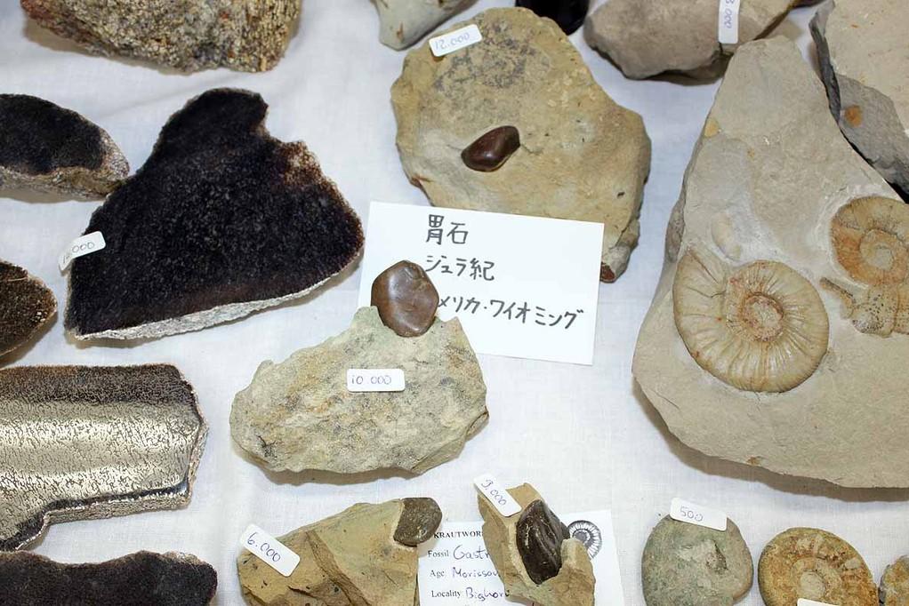 胃石 ジュラ紀 ワイオミング州