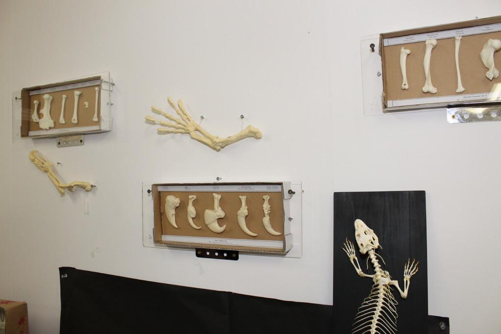 ㈲ミュージアムインポート 壁にもいろいろ骨が!