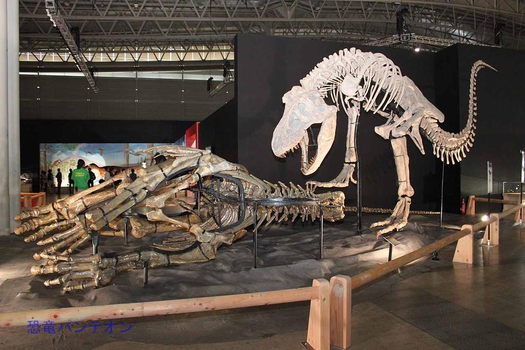 ズケンティランヌス vs. ズケンゴサウルス。 ズケンゴサウルスはハドロサウルス類。諸城の恐竜では最も多く発見されているそうです。