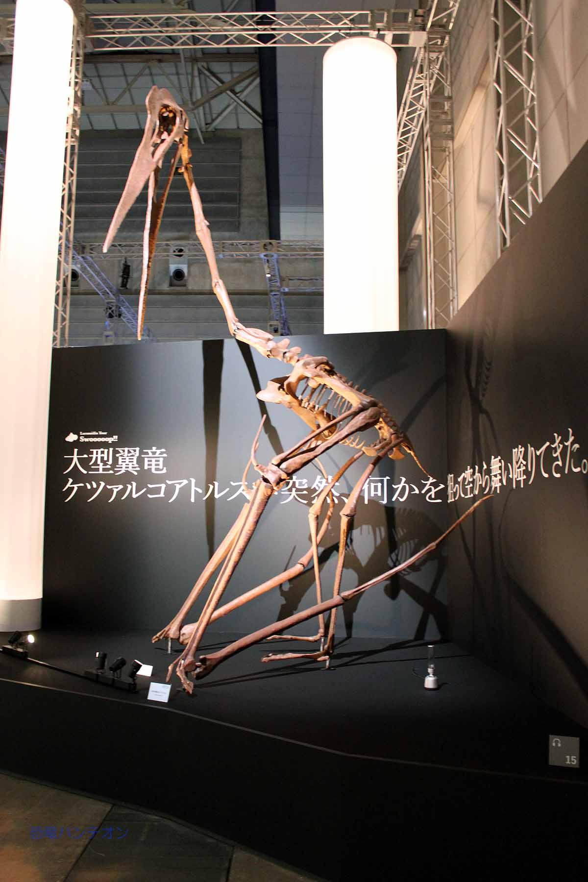 大翼竜、ケツアルコアトルスが突然舞い降りてきた。