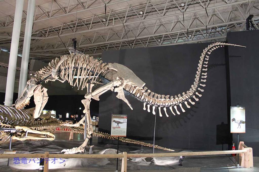ズケンティランヌス。諸城最大の捕食動物。ティランノサウルス類。全長11.4m。タルボサウルスよりやや大きいかも。