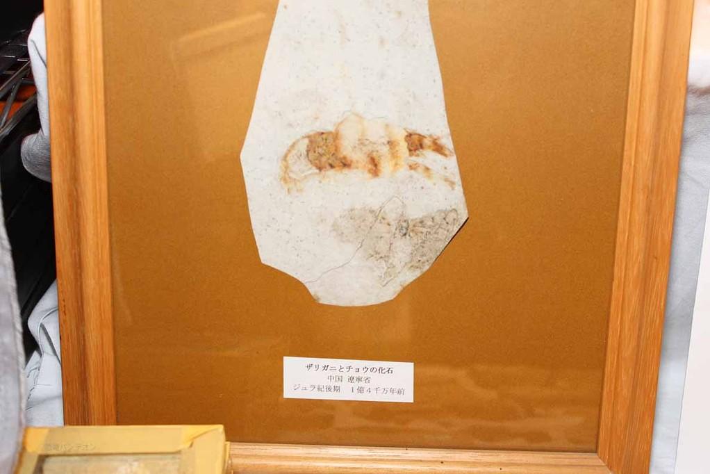 周益雅石社 ザリガニとチョウの化石 ジュラ紀後期 約1億4千万年前 チョウが密を吸っていたのなら、被子植物もすでにこの頃現れ、花を咲かせていたのでしょうか