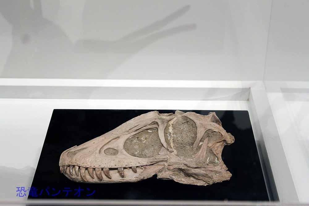 タルボサウルス幼体(実物化石)