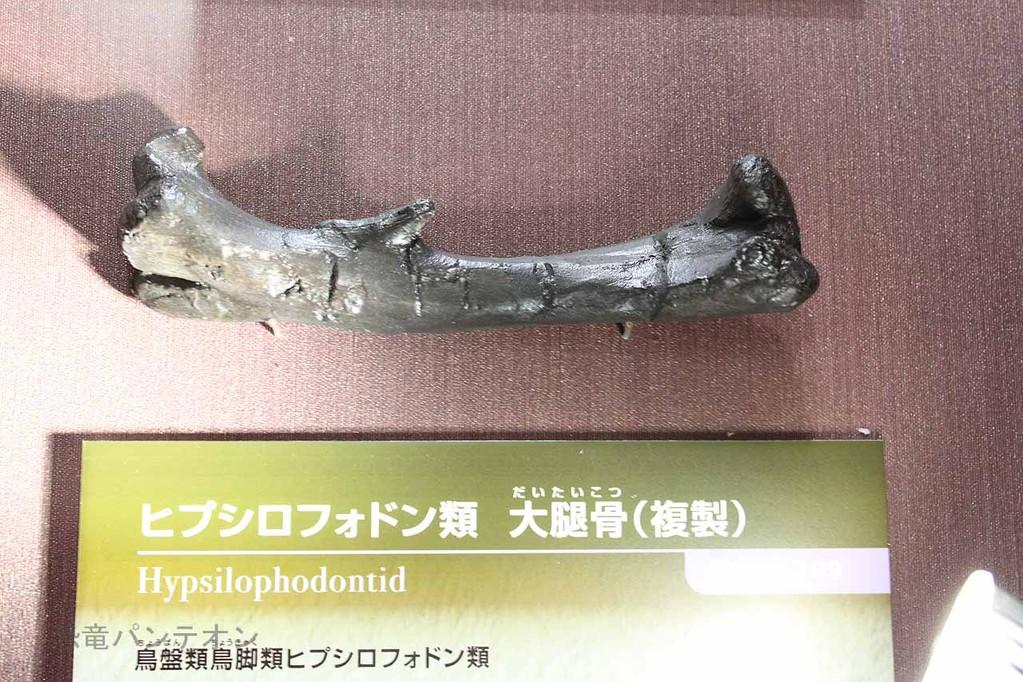ヒプシロフォドン類 大腿骨