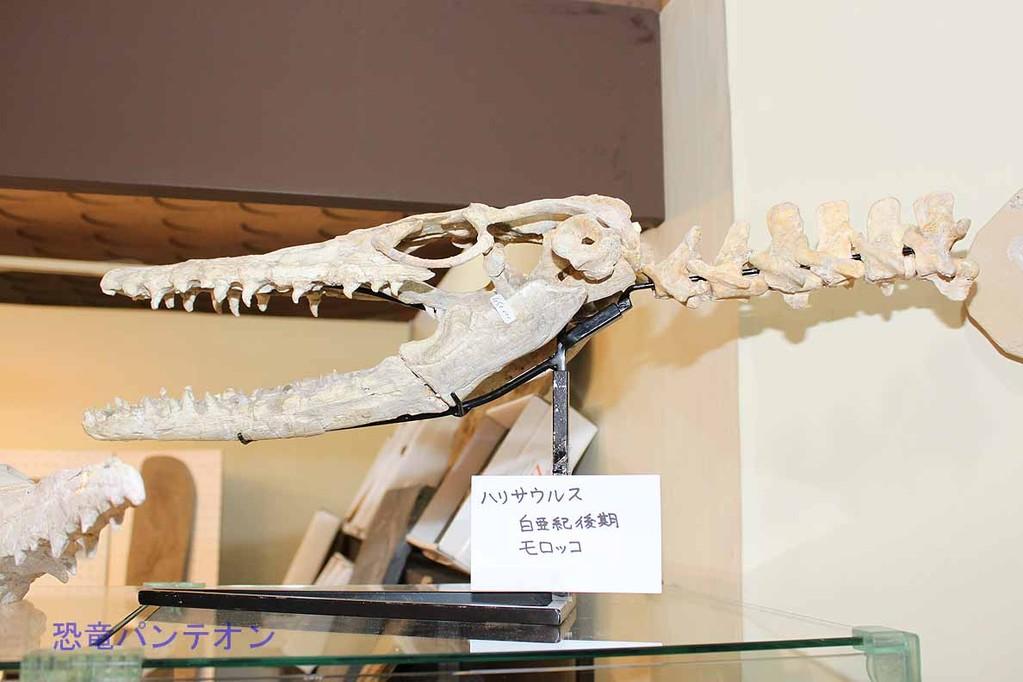 Zoic Sri ハリサウルス 白亜紀後期 モロッコ