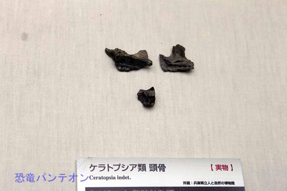 兵庫県丹波市の篠山層群から発見された、ケラトプシア類頭骨