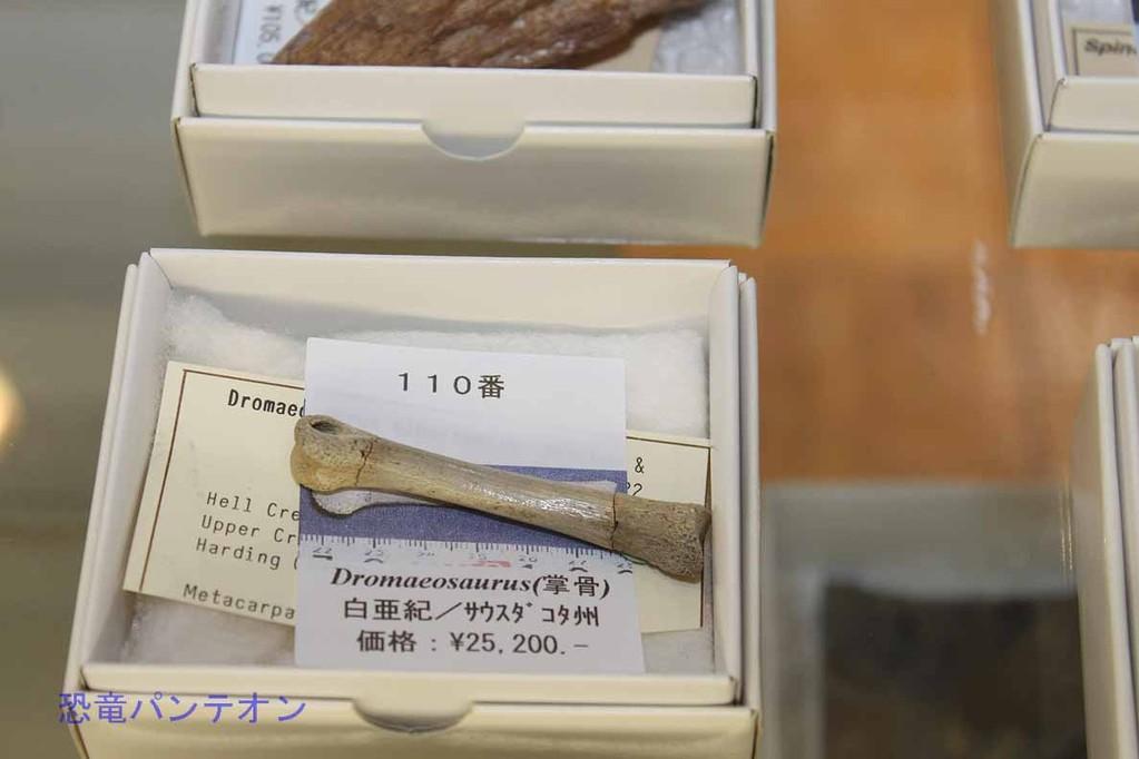 (株)ゼネラルサイエンスコーポレーション ドロマエオサウルス掌骨とありますが、metacarpalと書いてあるので中手骨でしょうか