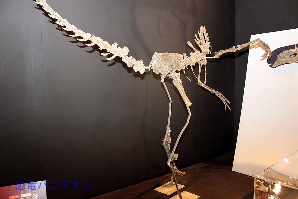 ハルピミムス(実物化石)